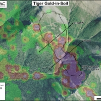 Tiger Gold-in-Soil